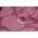 Diva Essenza 100% cotton: Berry Ring Sling